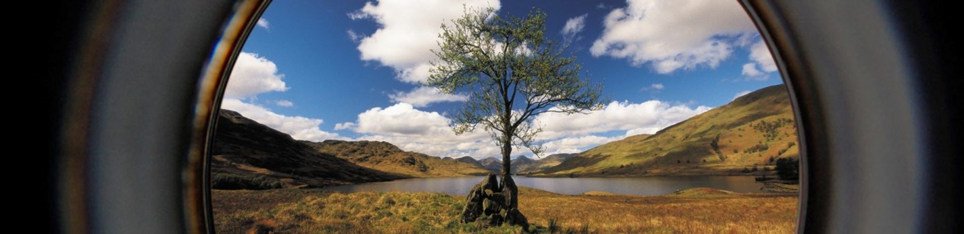 lonely-young-tree-with-stunning-loch-arklet-and-arrochar-alps-in-the-distance-seen-through-camera-lenses